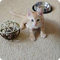 Adopt A Pet :: Ginger - Hollywood, FL
