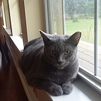 Adopt A Pet :: Taco - Homewood, AL