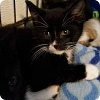 Adopt A Pet :: Jasper - Jefferson, NC
