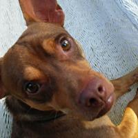Adopt A Pet :: Donovan - Overland Park, KS