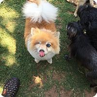 Adopt A Pet :: Rex - Blanchard, OK