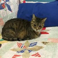 Adopt A Pet :: GYPSY - Brooksville, FL