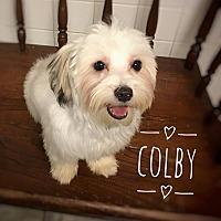 Adopt A Pet :: Colby - Maitland, FL