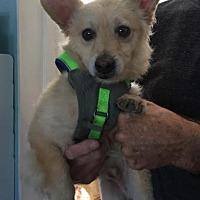 Adopt A Pet :: Tonto - San Diego, CA