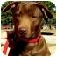 Photo 1 - Labrador Retriever Mix Dog for adoption in Pawling, New York - RILEY