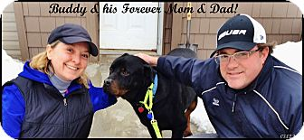 Rottweiler Dog for adoption in Darlington, Maryland - Buddy