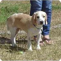 Adopt A Pet :: Jeffy - Phoenix, AZ