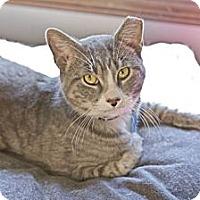Adopt A Pet :: Timmy - Grand Rapids, MI