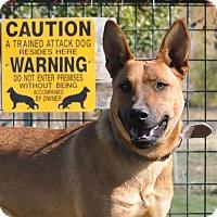 Adopt A Pet :: Remi - Hamilton, MT