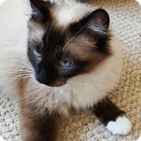 Adopt A Pet :: Camille - San Fernando Valley, CA