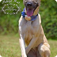 Adopt A Pet :: Jade - Fort Valley, GA