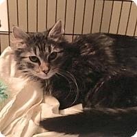 Adopt A Pet :: Marcus - East Brunswick, NJ