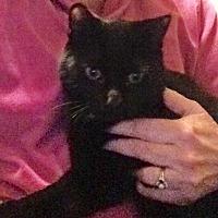 Adopt A Pet :: Deuce - Eureka, CA