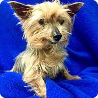 Adopt A Pet :: Nellie - Encino, CA