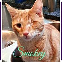 Adopt A Pet :: Smokey - Gonic, NH