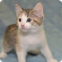 Adopt A Pet :: Becky - Medina, OH