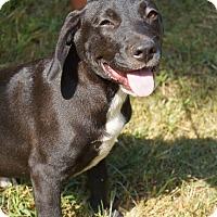 Adopt A Pet :: Paige - Newark, DE