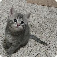 Adopt A Pet :: Santana - Cleveland, OH