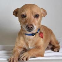 Adopt A Pet :: Ares - Medford, OR
