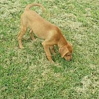 Adopt A Pet :: Ruby Sue - Trenton, NJ