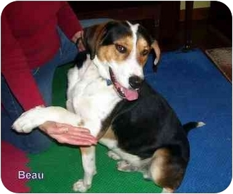 Greater Swiss Mountain Dog Mix Dog for adoption in Floyd, Virginia - Beau