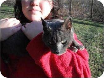 Domestic Mediumhair Cat for adoption in Rancho Palos Verdes, California - Lilly