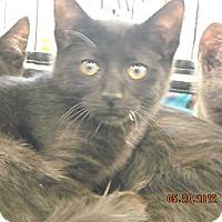 Adopt A Pet :: Alicia - Riverside, RI