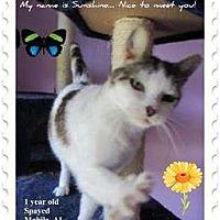 Adopt A Pet :: Sunshine - Mobile, AL