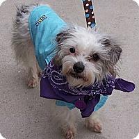 Adopt A Pet :: Fondu - San Angelo, TX