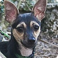 Adopt A Pet :: Lola - North Palm Beach, FL