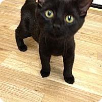 Adopt A Pet :: Jackson - Monroe, GA