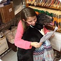 Adopt A Pet :: Jackyl - Glenwood, AR