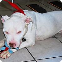 Adopt A Pet :: Sugar - Santa Monica, CA