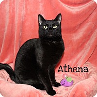 Adopt A Pet :: Athena - Foothill Ranch, CA
