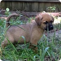 Adopt A Pet :: Churchill - Christiana, TN