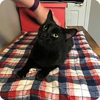 Adopt A Pet :: Selena - Barrington Hills, IL