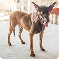 Adopt A Pet :: Banjo - Phoenix, AZ