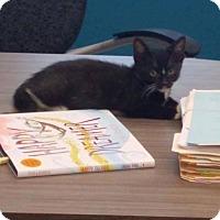 Adopt A Pet :: YANG - Hazlet, NJ