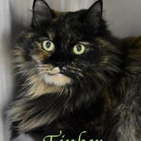 Adopt A Pet :: Tinker - Port Hope, ON