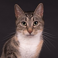 Adopt A Pet :: Angel - Wilmington, DE