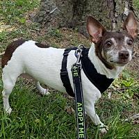Adopt A Pet :: Savannah - Bloomington, IL