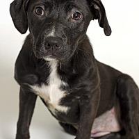 Adopt A Pet :: Maddie (foster care) - Baton Rouge, LA