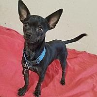 Adopt A Pet :: Zacky - Phoenix, AZ