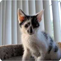 Adopt A Pet :: Erin - Catasauqua, PA