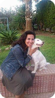 Golden Retriever/Collie Mix Dog for adoption in Toronto, Ontario - Fidel