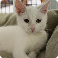 Adopt A Pet :: Powder - Medina, OH