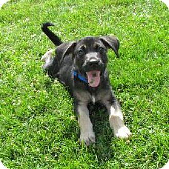 German Shepherd Dog Mix Puppy for adoption in Janesville, Wisconsin - Anakin