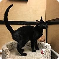Adopt A Pet :: Galahad - Riverside, CA