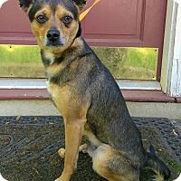 Adopt A Pet :: Clover - Lawrenceville, GA