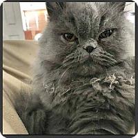 Adopt A Pet :: Brady - Gilbert, AZ